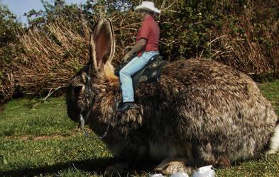 Hare Raising by GAD-ZUCHS