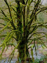 Tree of Mystery by Thundercatt99