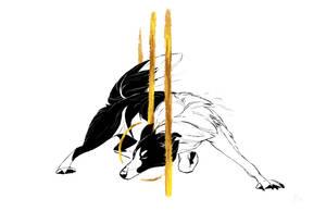 Dog A Day 14: Border Collie by lightningspam