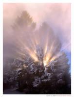 Winter's Magic by Ian-Plant