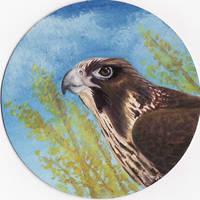 Falcon disk by dorini