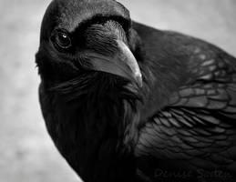 The Raven by DeniseSoden