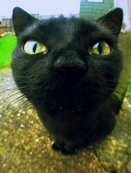 Fisheye Cat by Vickstar