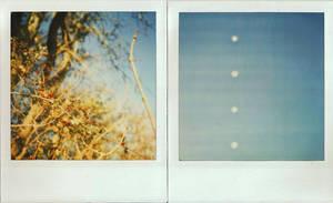 Autumn Berries by Vickstar