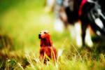 Fetch boy! by Frisullka1