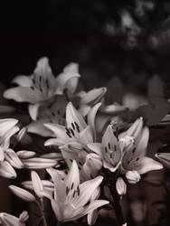 Summer Silk - Monochrome by KBeezie