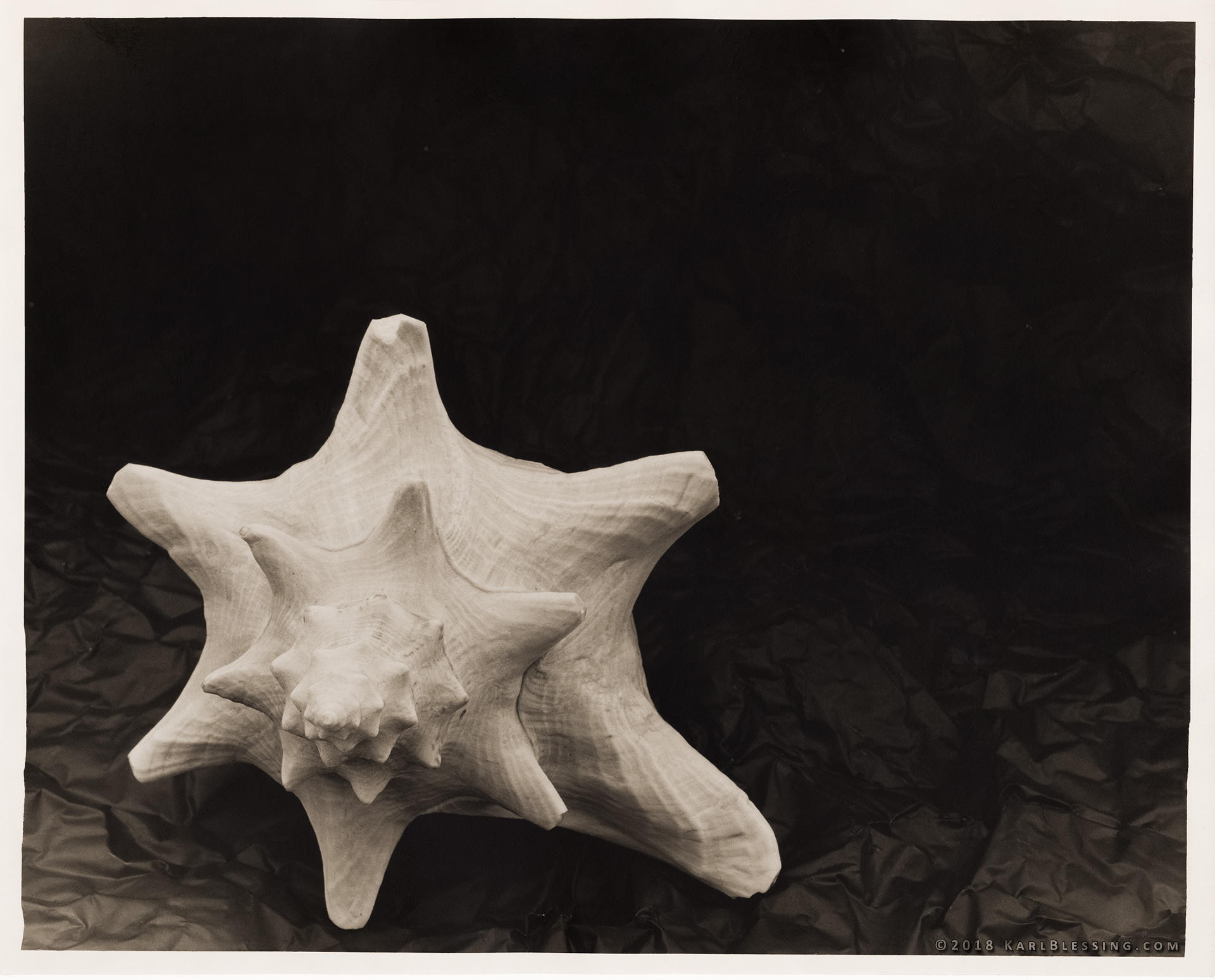 Shell (4x5 Print) by KBeezie