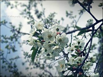 Spring ._. by blue-juiceX