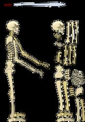 Skeleton by Mr-Hide-fr