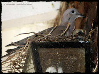 Dove Nest by martatigerwoman