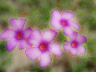 flowers power by martatigerwoman