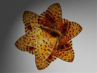buterfly flower by martatigerwoman