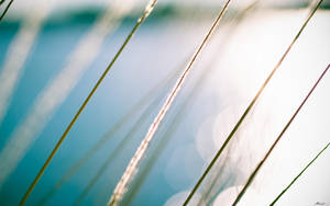 Reeds By The Water by MattLanham