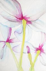 Des Fleurs by shebid