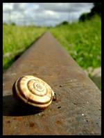09 snail by yevvie