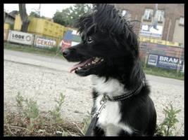 09 happy dog by yevvie
