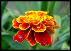 09 wet flower by yevvie