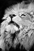 The Lion by joniwagnerart