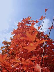 Michigan Leaves by midoriakaryu