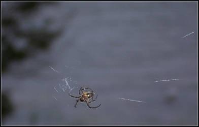 Spider by shindakun