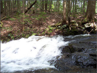 Spectacle Pond Trail 01 by shindakun