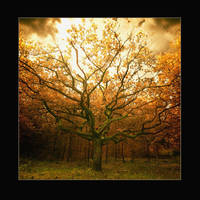 In october by raun