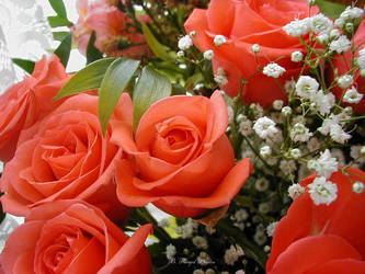 Susans gift by flowershot400