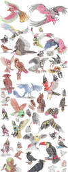 Bird Pokemon by DragonlordRynn