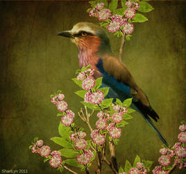 Pretty Bird by tizjezzme