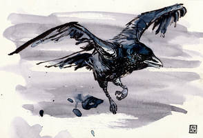 Crow by Awnen
