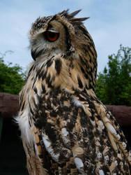 Owl I by xXBittersweetLifeXx