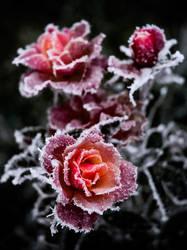 cold by Franiuk