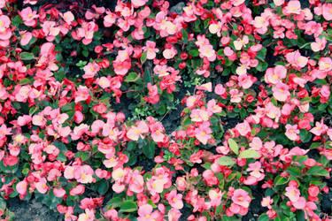 pink by illummi