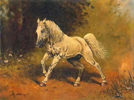 White Horse by dusanvukovic