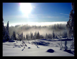 Misty Forest by petsun