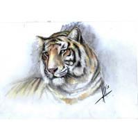 Tigar 2 by HrvojeSilic