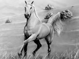 Horse by HrvojeSilic