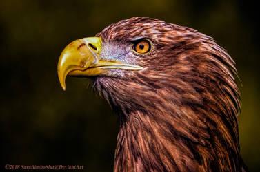 Majestic Predator by SaraWolfPhotographer