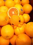 Orange in the Orange by star-cookies