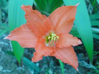 Orange by ikzan