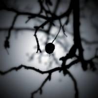 Winter blues by lostknightkg