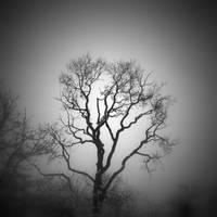 Winter tree by lostknightkg