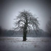Winter watch by lostknightkg