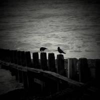 sea crows by lostknightkg