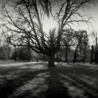 Winter sun II by lostknightkg