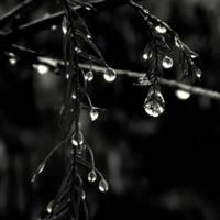 drops.. by lostknightkg
