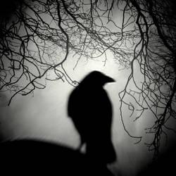 Raven Watch by lostknightkg