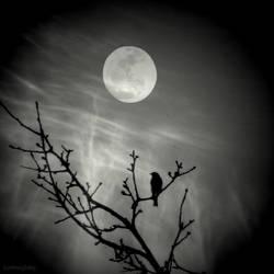 Moon Sparrow by lostknightkg