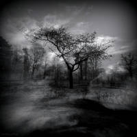 Forgotten gardens by lostknightkg