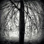 Summer tree by lostknightkg